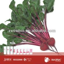 Natural red color red beetroot powder for ic-cream application