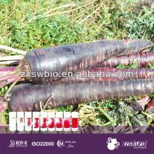 edible color black carrot seeds with low price