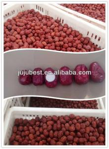 Organic fruit Chinese dried red jujube/date
