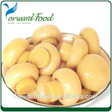 Fresh canned mushroom top quality in jar or tin
