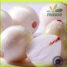 Chinese High Quality Fresh Onion with Low Price / canning onions / pickling onions