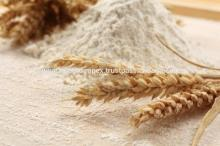 Fresh Wheat Flour Manufacture / Supplier from India