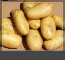 2014 fresh potato price lowest price premium quality shandong