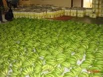 Ripe and Unripe quality Bananas