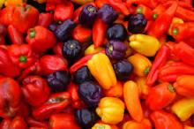 Color Capsicum Red, Yellow