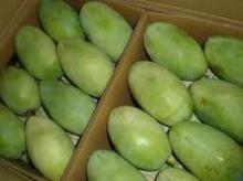Excellent Quality 100% Fresh Harvested Mangoes