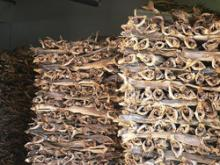 frozen dried stockfish