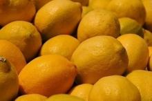 CITRUS FRUITS YELLOW ADALIA LEMONS