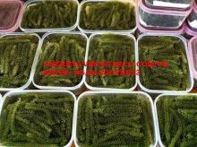 FRESH & DRIED SEA GRAPES