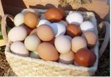 Brown and White Fresh Eggs