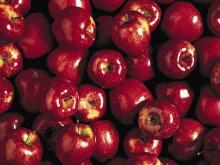Top quality fresh red delicious apples for sale