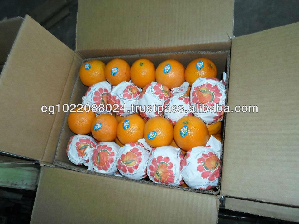 Fresh Egypt Navel Orange products,Egypt Fresh Egypt Navel Orange supplier960 x 720 jpeg 115kB
