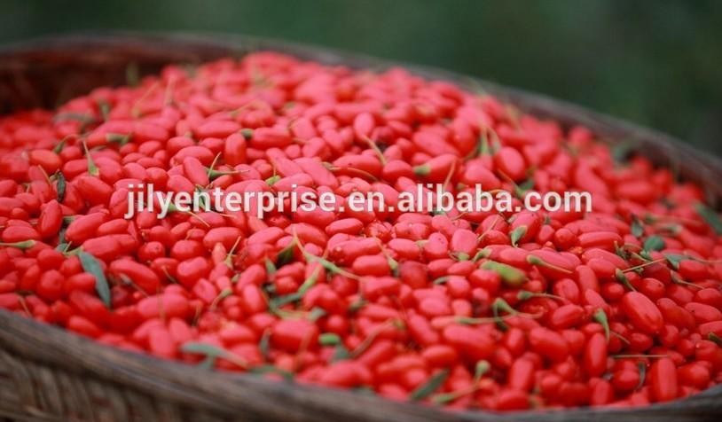 goji berries,wolfberry, lycium barbarum organic ningxia zhongning goji berries/organic dried goji be products,China goji berries,wolfberry, lycium ...814 x 476 jpeg 87kB