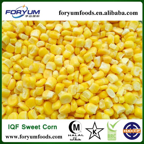 IQF Frozen Sweet Corn Seed