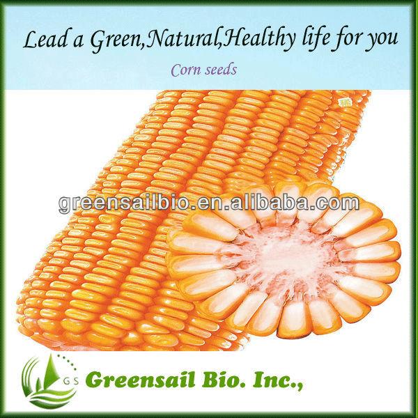 2014 Yellow corn seed sale