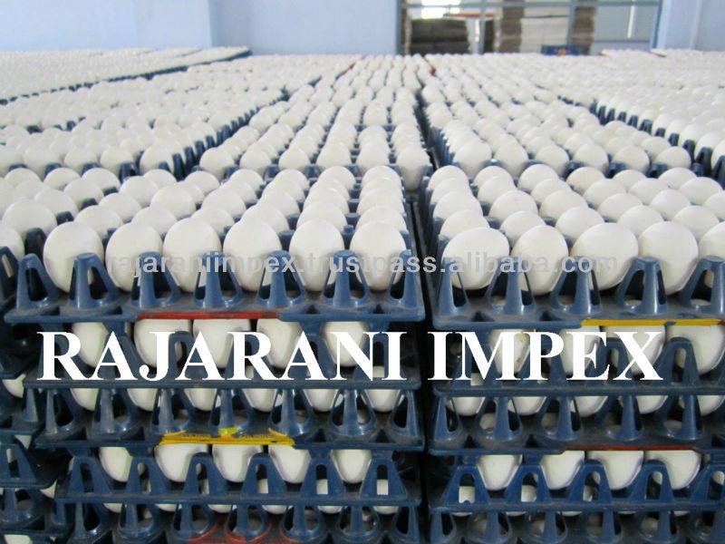 Plaas Vars pluimvee Indiese wit dop hoender tafel eiers from India ...