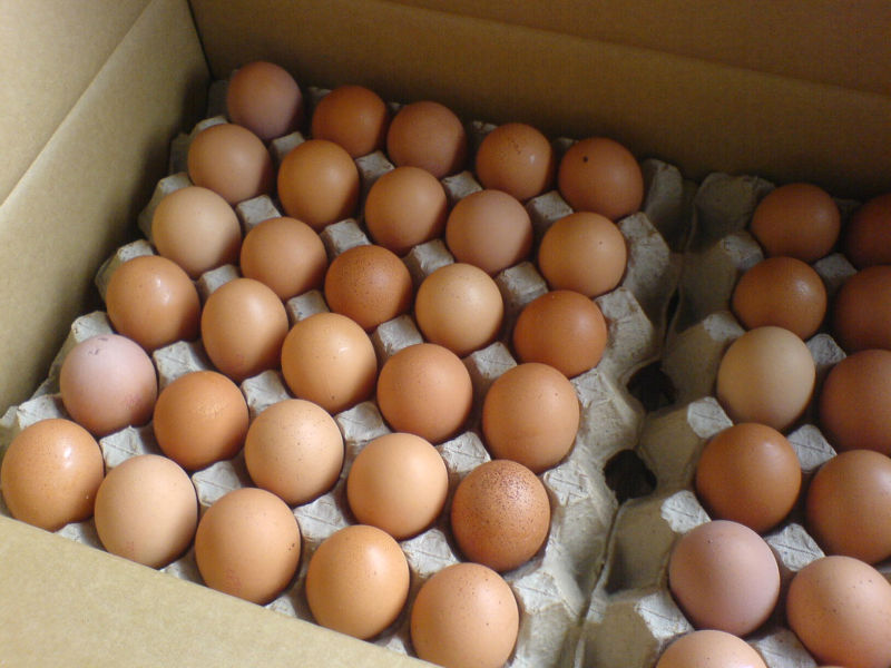 grade A high quality FRESH Eggs from Denmark , grade A high quality FRESH Eggs manufactory MCDONALD'S DANMARK ApS800 x 600 jpeg 85kB