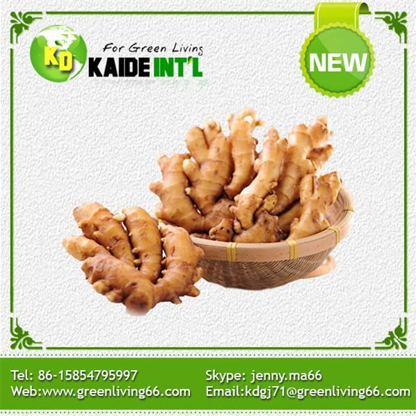 Fresh ginger 100g products china fresh ginger 100g supplier for 100 degree chinese cuisine