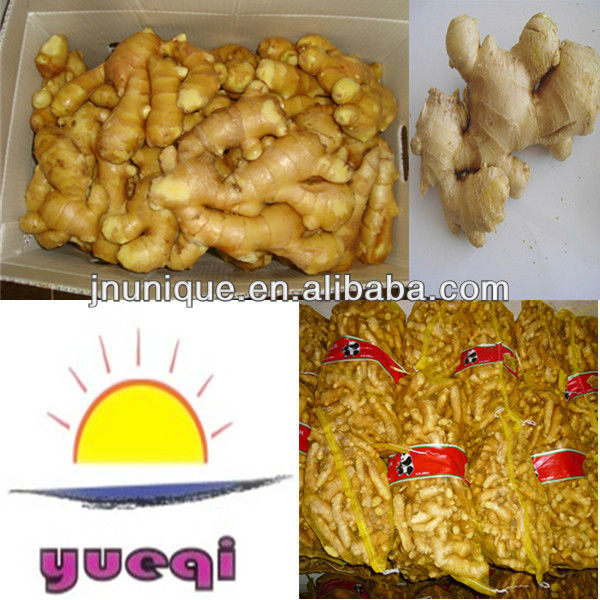 Ginger fresh ginger chinese supplier products china ginger for 100 degree chinese cuisine