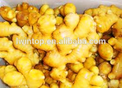 export of agriculture pickled ginger brine ginger