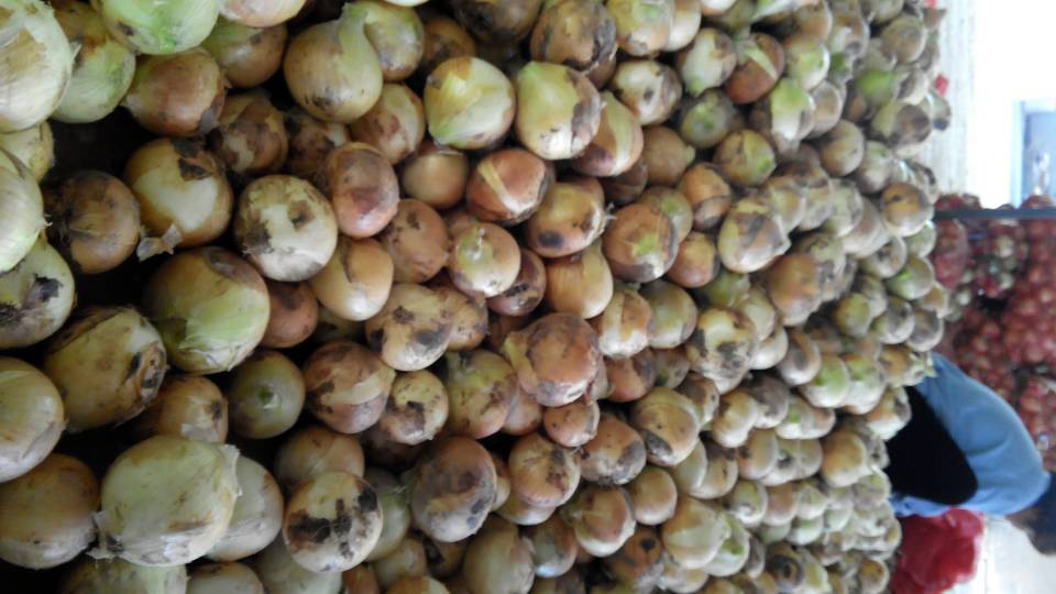 2014 new crop yellow onion small red onion