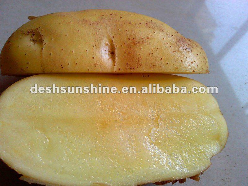 Export 2012 new crop fresh potato in China