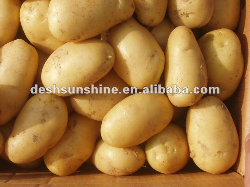 2012 new crop potatoes fresh price for sale