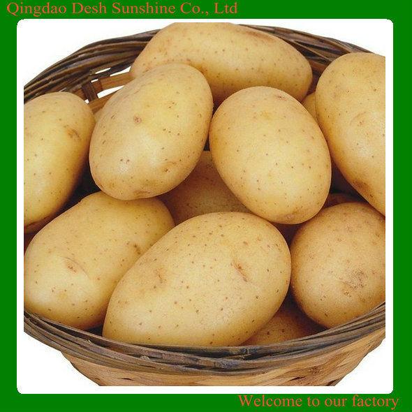 Chinese 2013 New Crop neimenggu sweet Potatoes