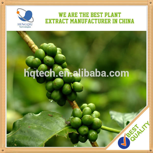 High Quality Herbal Extract green coffee bean extract herb medicine made in China