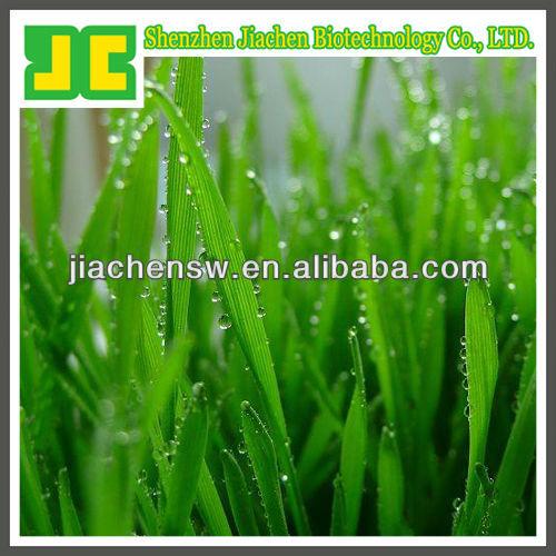 organic wheat grass extract powder in 5:1 & 10:1