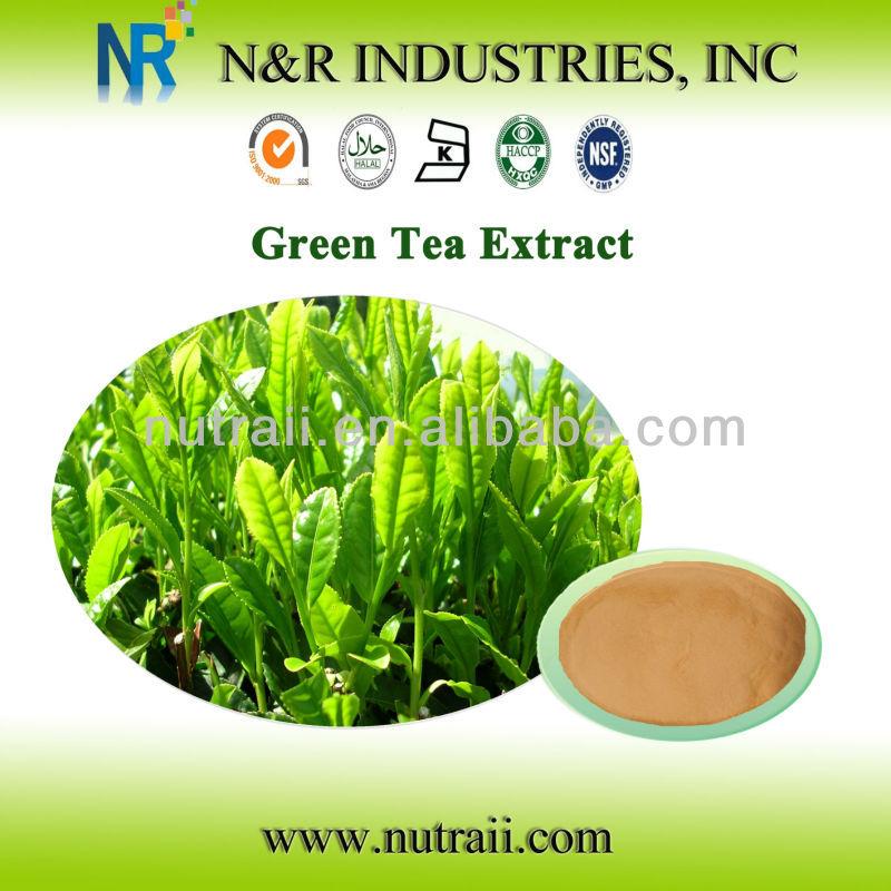 Good quality green tea powder extract Polyphenol 75%