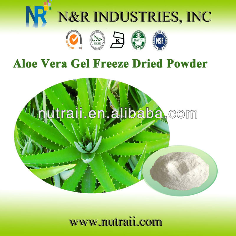 Reliable supplier aloe vera Gel freeze dried powder 100:1 and 200:1