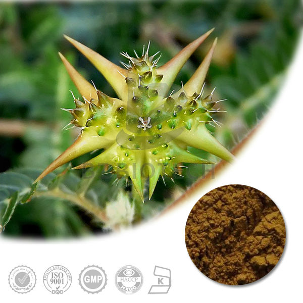 Nature S Source    Professional Plant Food