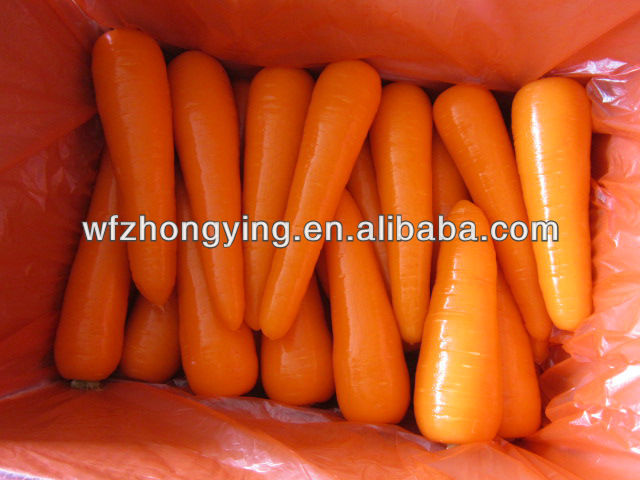 Chinese fresh carrot products,China Chinese fresh carrot supplier640 x 480 jpeg 61kB