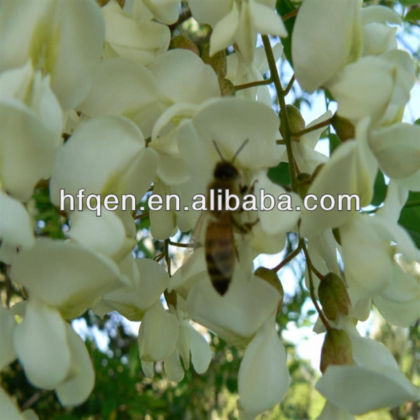 Pure Acacia Honey