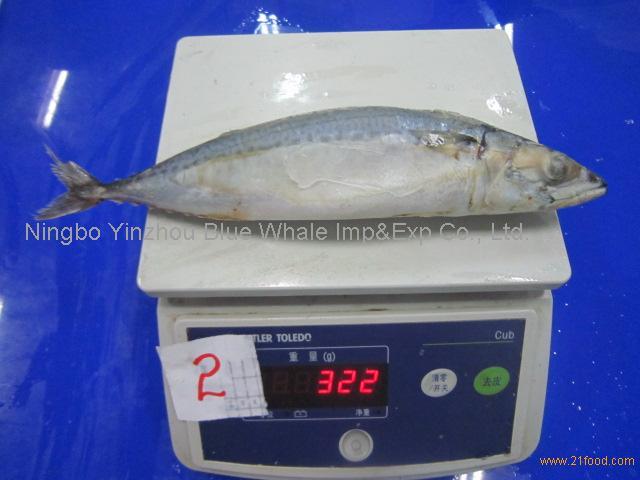 frozen scomber japonicus pacific mackerel fish