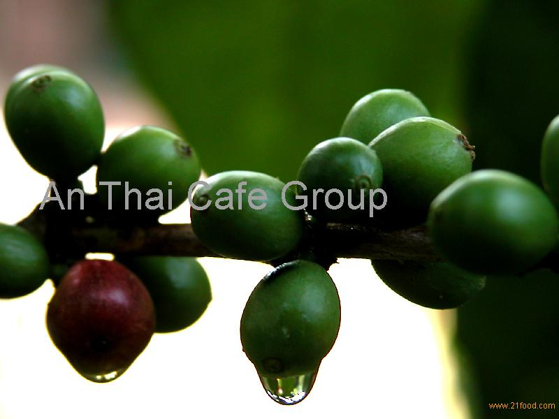 Roasted Coffee Beans (ROBUSTA)
