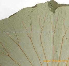 Lotus Leaf Extract/nuciferine