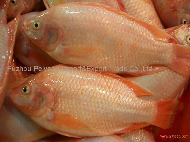 Frozen Red Tilapia Gutted Scaled