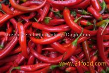 fresh and dry red chilli peper for sale