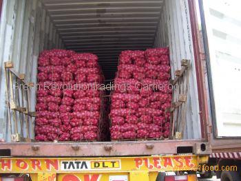 red onion for supply