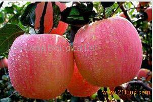 Apple extract (phlorizin)