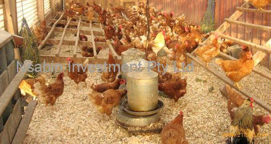 Wheat Bran Best for Animal Feed