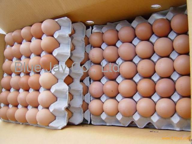 High quality Fresh Eggs
