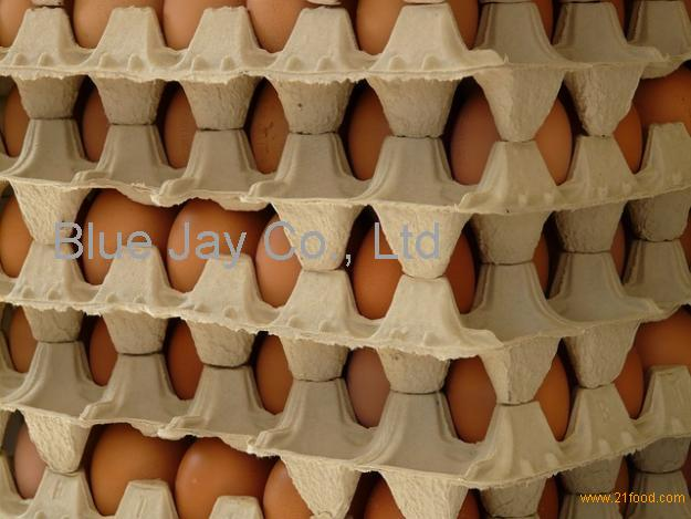 Fresh Eggs from Thailand