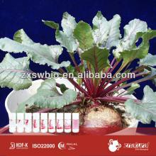 Natural beet red color red food pigment red beet root p.e.