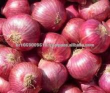 Red Dried Fresh Onion for Sale