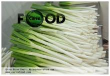 Green Chinese onion OWN FARM 10kg