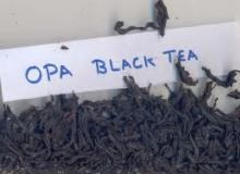 Black tea OPA1