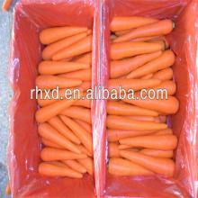 Hot!! Chinese new crop fresh carrot